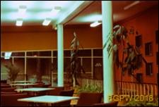 Dom Sportu WKKFiT, widok wnętrza klubowego, Zielona Góra